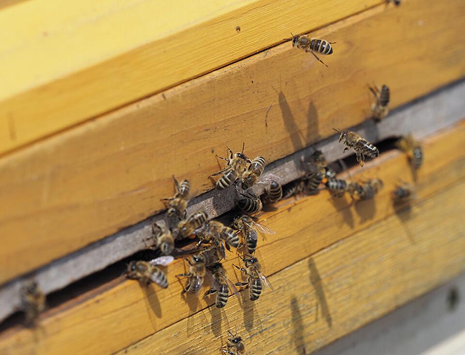 Hauff-Technik adoptiert drei Bienenvölker. Happy World Bee Day!